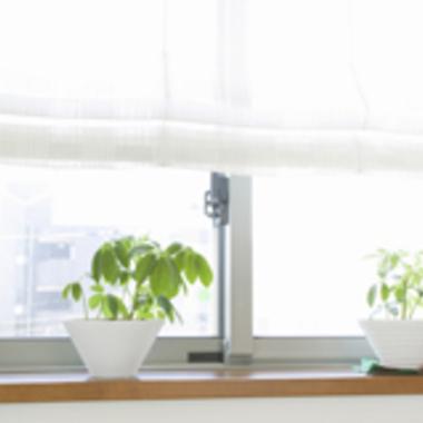 ハウスクリーニング 植木鉢
