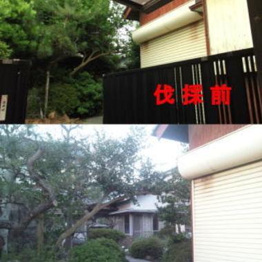 住宅庭 植木の剪定 植木の伐採比較写真