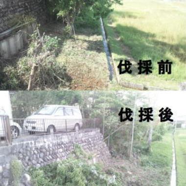 駐車場下 植木の剪定 植木の伐採比較写真