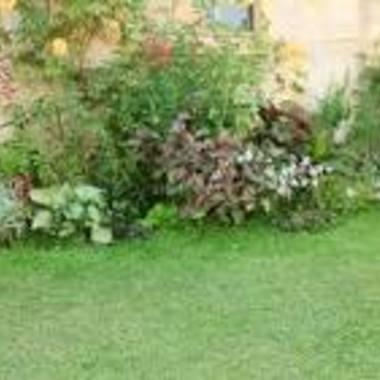 庭木のお手入れ・草刈り作業・除草剤の散布