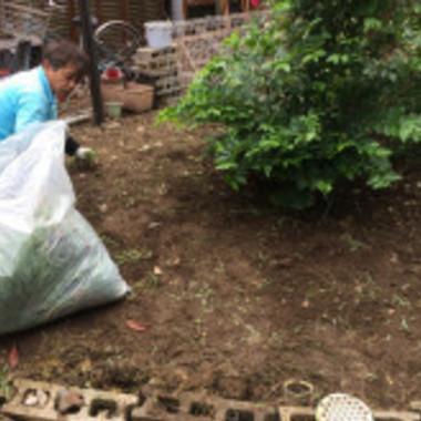 庭のお手入れ・草むしり作業中
