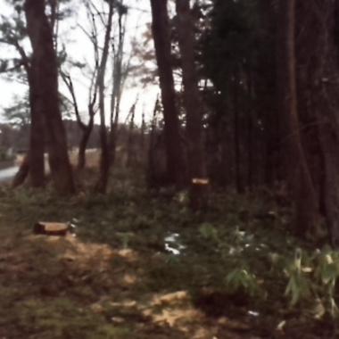 大木伐採工事後