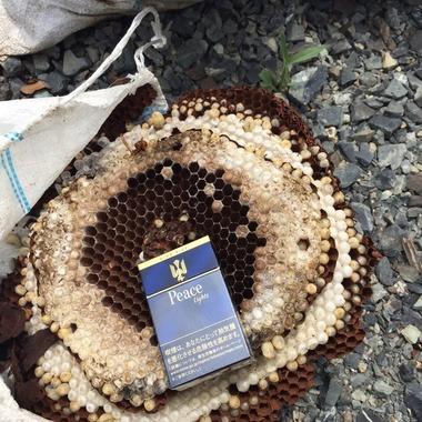 美作市 ハチの巣駆除 完了
