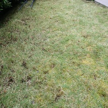 雑草取り後 敷地
