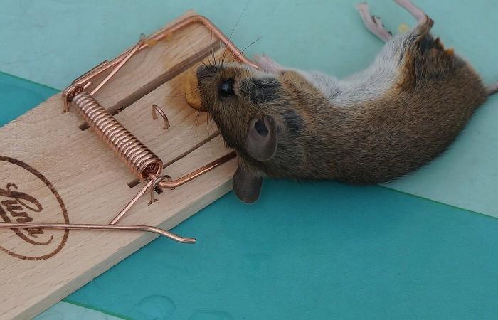 ネズミ 駆除 | ネズミ被害の予防法