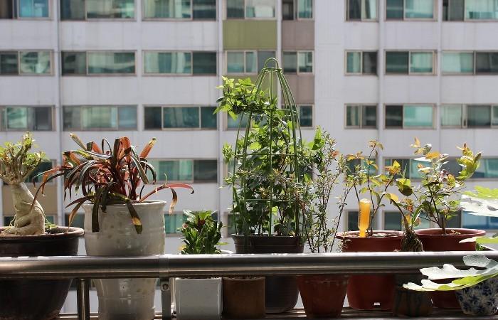 庭 リフォーム | 初心者が始めるベランダガーデニング