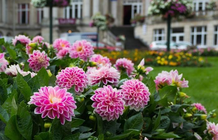 庭 リフォーム | ガーデニング工事の基礎知識