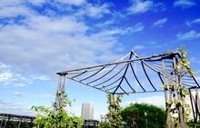 屋上緑化の基礎知識