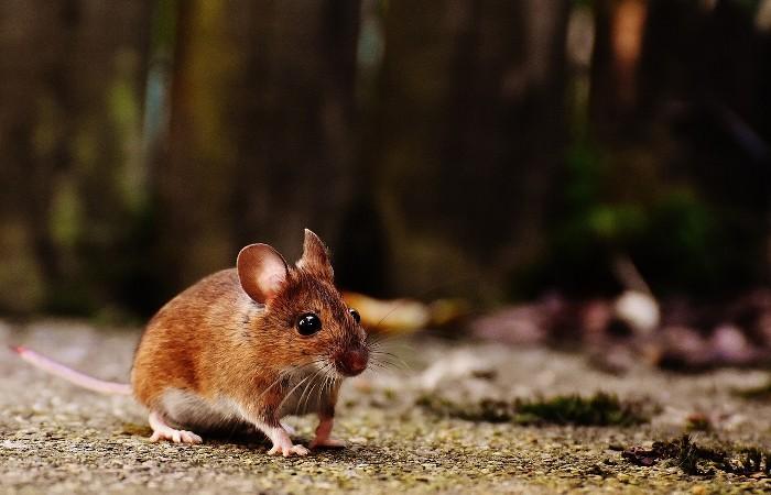 ネズミ 対策 自分で
